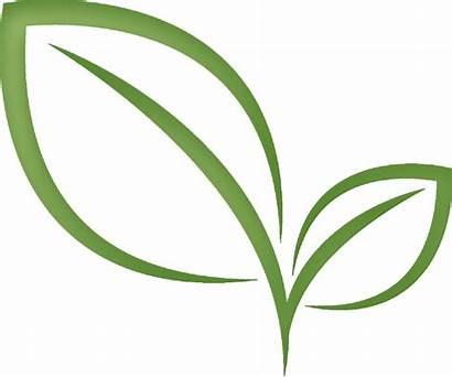Tea Leaf Leaves Clipart Clip Transparent Matcha