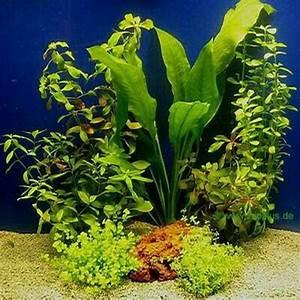 Pflanzen Für Aquarium : anb kleinanzeigen aquarium und fische deine ~ Buech-reservation.com Haus und Dekorationen