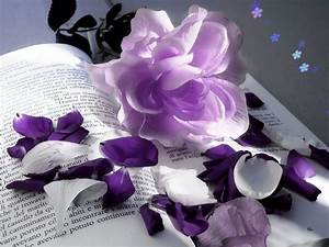 Violet Flowers Wallpapers HD Pictures