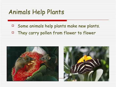 how do animals help lesson 3 3 how do plants and animals need each other