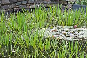 Grünes Wasser Im Gartenteich Hausmittel : sch nes f r den gartenteich schwimmende wasserpflanzen das gr ne medienhaus ~ Watch28wear.com Haus und Dekorationen