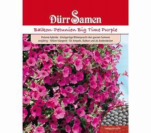 Petunien Samen Kaufen : d rr samen petunien 39 big time purple 39 dehner garten center ~ Michelbontemps.com Haus und Dekorationen