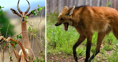 23 Strange Animals So Bizarre You'll Think Nature Messed Up
