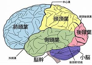 File Brain Diagram Ja Svg