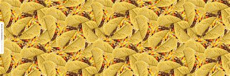Atlanta Falcons Hd Wallpaper Cute Taco Wallpaper Wallpapersafari