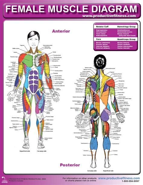 Human muscle diagram leg muscles diagrams human anatomy printable diagram. simple diagram. I need something more detailed. | Healthy ...