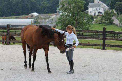 smart horse rae callie king courtesy