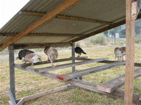 turkey coop designs just coop designs for chicken roosts learn how