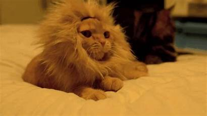 Cat Lion Tech Funny Gifs Giphy Cutest