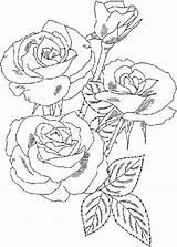 Coloring Bouquet Roses Rose Flower Flowers Drawing Sketch Printable Getdrawings Luna Sketches Colorluna sketch template