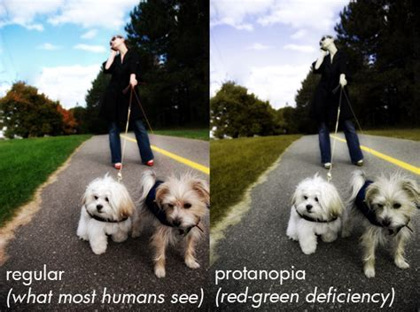 how do dogs see color are dogs color blind