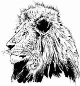Coloring Pages Lions Lion Realistic Head Face Drawing Adult Printable Mandala Sunday Adults Animal Faces Heads Tattoo Colorings Getdrawings Bible sketch template