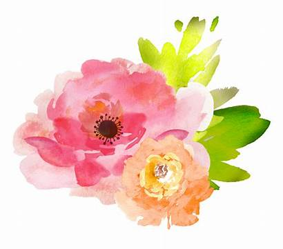 Watercolor Clipart Transparent Flowers Peach Svg Webstockreview
