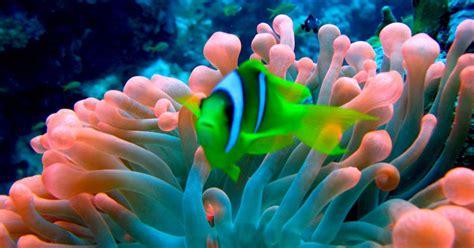 les plus beaux aquarium de d 233 couvrez les plus beaux coraux du monde meltydiscovery fr