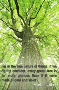 Trees Nature Quote