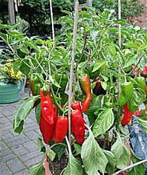 Gemüse Im Balkonkasten by Gem 252 Se Und Obstgarten 187 Gem 252 Se In T 246 Pfen