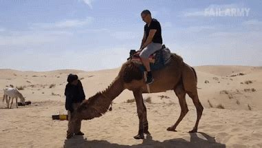 Way Camel GIF - Find & Share on GIPHY