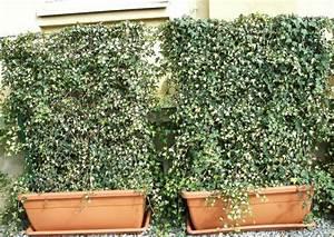 Winterharte Pflanzen Für Balkonkästen : rankpflanzen als gr ner sichtschutz f r balkon und dachgarten ~ Orissabook.com Haus und Dekorationen