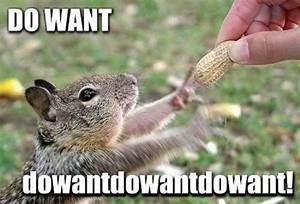 Squirrel Nut Funny Quotes. QuotesGram