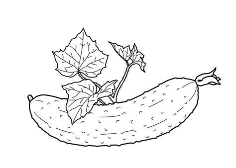 cucumber slice clipart black and white cucumber drawing black and white www imgkid the