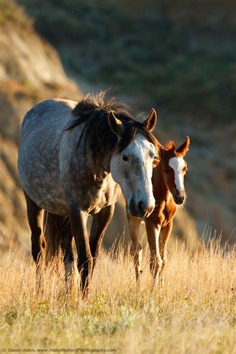 images  studly horses  pinterest montana