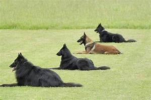 basic dog commands canine boot camp With dog boot camp