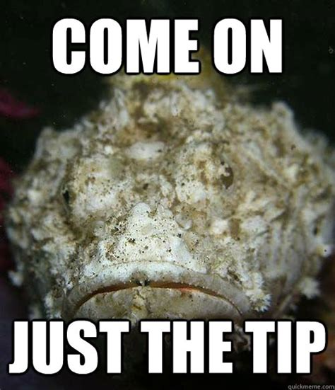 Just The Tip Meme - come on just the tip misc quickmeme