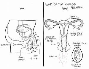 Female Reproductive System Drawing At Getdrawings