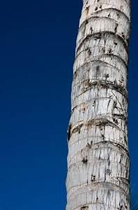 Unbleaching Tree Bark  U2013 Fixing Faded Bark On Trees