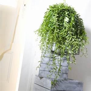 Plantes Et Jardin : aeschynanthus japhrolepis plantes et jardins ~ Melissatoandfro.com Idées de Décoration