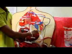 science working model of full human body part 1 eye ear ...