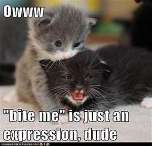 funny kittens - Dump A Day