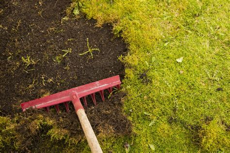 get rid of moss in your lawn with these expert tips the