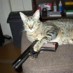 cat gun cats with guns