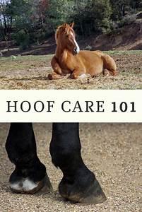 Horse U2019s Feet Trim Frequency  Easy Guide