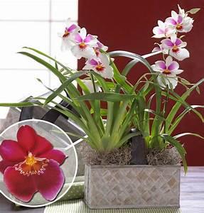 Schöne Orchideen Bilder : gartencenter ludwig gr n erleben orchideen vielfalt ~ Orissabook.com Haus und Dekorationen