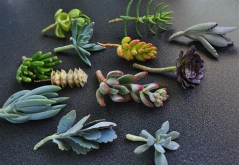 mini plante grasse diy cadeaux quot nature quot pour les invit 233 s de votre mariage la mari 233 e en col 232 re mariage