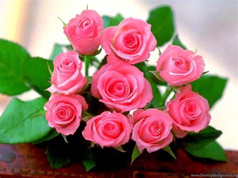 Rose Flower Wallpaper Hd Free Download Pink Rose Flowers Wallpapers Free Download For Mobiles