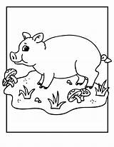 Pig Coloring Printable Animal Template Pigs Colouring Valentine Farm Animals Printables Sheets Cartoon Classroomjr sketch template