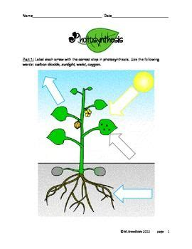 activities photosynthesis activities and search pinterest