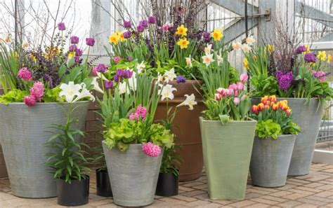 Frühlingsblüten Für Den Balkon