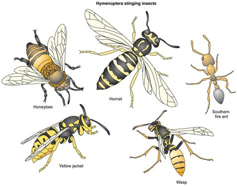 beeutiful bees products services beeutiful bees