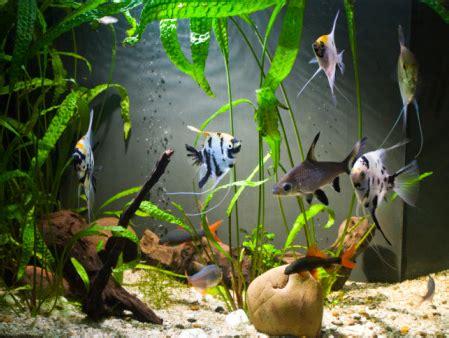 best fish and aquarium supply stores in miami 171 cbs miami