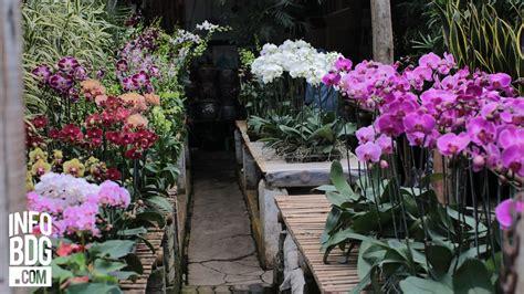 tempat beli tanaman hias bandung