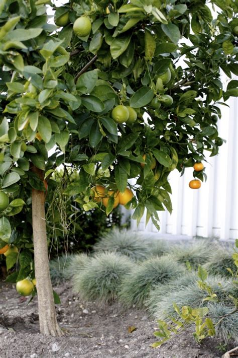citrus salad tree what are you wearing today taste with the eyes