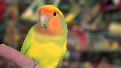 exotic birds weneedfun