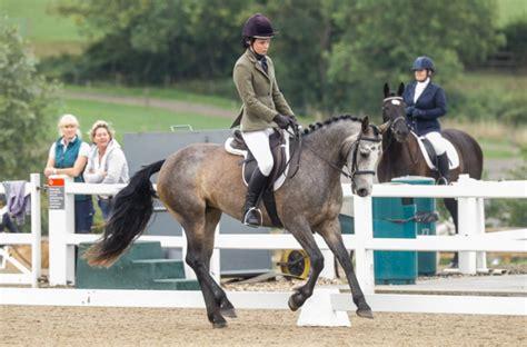 connemara ponies horse