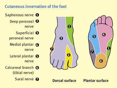 foot tingling dorsal  plantar skylight massage  skincare
