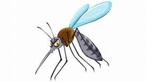 Was Essen Mücken : sommerplage dieses jahr besonders schlimm hilfe ich habe m cken ratgeber ~ Frokenaadalensverden.com Haus und Dekorationen