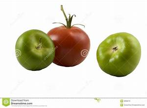 Green And Red Tomatoes Royalty Free Stock Images - Image ...